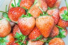 Vers rood Aardbeienfruit Royalty-vrije Stock Afbeeldingen