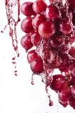 Vers rood druivesap Stock Foto