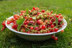 Vers Rood fruit in een kom Royalty-vrije Stock Afbeeldingen