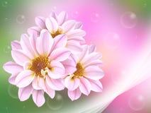 Vers roze Royalty-vrije Stock Afbeelding