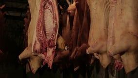 Vers ruw vlees in de ijskast stock video