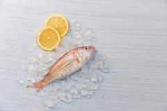 Vers ruwe vissenzeevruchten en citroenijs met witte houten lijstachtergrond stock foto