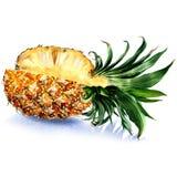 Vers sappig gesneden geïsoleerd ananasfruit, waterverfillustratie op wit vector illustratie