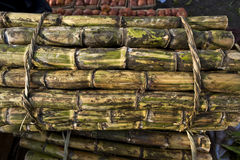 Vers Sugar Cane royalty-vrije stock afbeeldingen
