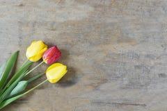 Vers tulpenboeket over houten lijstachtergrond met exemplaar spac Stock Foto