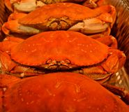 Vers Washington State Cooked Crab stock foto