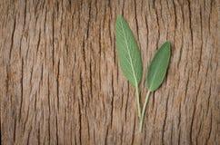 Vers wijs blad op rustieke houten achtergrond Sage Benefits Anti Royalty-vrije Stock Fotografie