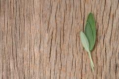 Vers wijs blad op rustieke houten achtergrond Sage Benefits Anti Royalty-vrije Stock Afbeelding