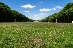 Versailles Garden. Field of grass and flower under the blue sky and rows of tress Royalty Free Stock Photo