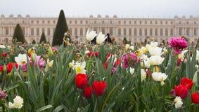 Versailles Gardens Flowers Royalty Free Stock Photo