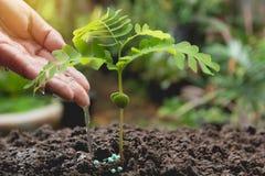 Versamento della plantula dall'annaffiatoio Giardinaggio ed innaffiare Fotografia Stock