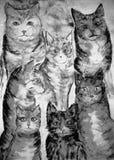 Versammlung der unterschiedlichen Art der Katzen in Schwarzweiss lizenzfreie abbildung
