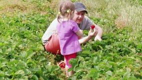 Versammlungsgartenerdbeere des Mannes und des kleinen Mädchens zum Korb stock video