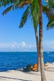 Versanden Sie Strand mit Palmen und Strandstühlen Stockfotografie
