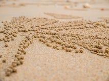 Versanden Sie Trinkwasserbrunnen-Krabben auf Sandküste in der Natur Haus eines Geistes c stockfotos