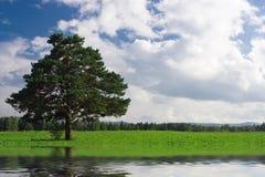 Verschönern Sie Baum auf dem Feld unter blauem Himmel landschaftlich Stockfotos