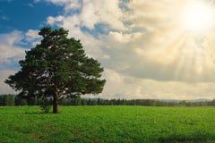 Verschönern Sie Baum auf dem Feld unter blauem Himmel landschaftlich Lizenzfreies Stockfoto