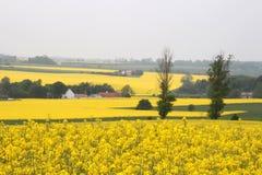 Verschönern Sie in Belgien landschaftlich Stockfoto