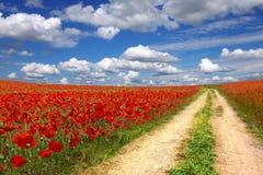 Verschönern Sie mit alter Straße auf der Mohnblumeplantage landschaftlich Lizenzfreies Stockfoto