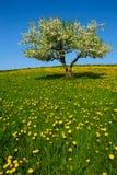 Verschönern Sie mit Apfelbaum landschaftlich Stockfotos
