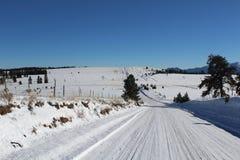 Verschönern Sie mit blauem Himmel und Bäumen in Kolorado landschaftlich Lizenzfreie Stockbilder