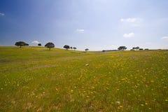 Verschönern Sie mit Blumen landschaftlich Lizenzfreies Stockfoto