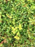 verschönern Sie sehr grünes Gras Stockfotos