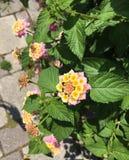 verschönern Sie sehr wenig Blume Lizenzfreie Stockfotografie