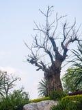 Verschütten des Baums Lizenzfreies Stockfoto