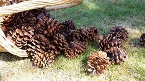 Verschütteter Korb von pinecones Lizenzfreie Stockfotos
