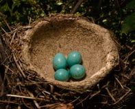 Verschachteln Sie mit grünen Eiern Lizenzfreie Stockfotografie