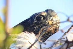 Verschachtelungs-Storch Wakodahatchhe-Sumpfgebiete stockfotografie