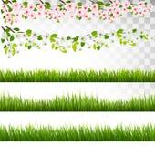 Verscheidene bedekken en bloesem van kers en sakuragrenzen met gras royalty-vrije illustratie