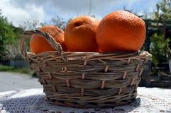 Verscheidene biologische sinaasappelen Royalty-vrije Stock Foto