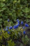 Verscheidene die bloemen door de zon op een vage achtergrond van gras worden aangestoken royalty-vrije stock fotografie