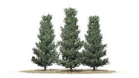 Verscheidene diverse Fraser Fir-bomen in de winter royalty-vrije illustratie