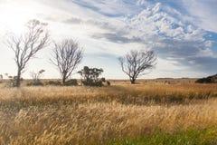 Verscheidene droge bomen op een grasgebied Stock Foto