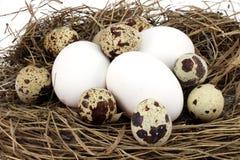 Verscheidene eierenkip en kwartels Stock Foto's