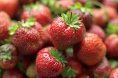 Verscheidene heldere rode rijpe bessen van aardbei in een natuurlijke blik Stock Foto's