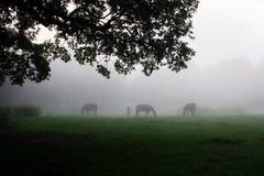 Verscheidene paarden Stock Foto