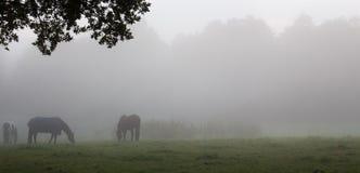 Verscheidene paarden Stock Fotografie