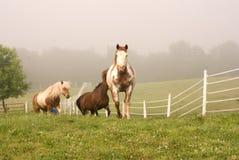 Verscheidene paarden die meer dan stijging komen Stock Fotografie