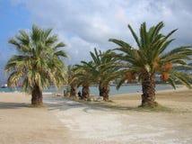 Verscheidene palmen Royalty-vrije Stock Afbeeldingen