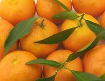 Verscheidene sappige mandarin Royalty-vrije Stock Foto's