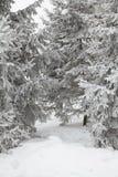 Verscheidene snow-covered sparren Royalty-vrije Stock Afbeeldingen