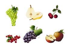 Verscheidene soorten Vruchten vector illustratie