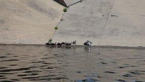 Verscheidene species van schildpadden die in de zon zonnebaden stock videobeelden