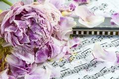 Verscheidene vernietigde roze pioenen met harmonika zijn op de muzieknoten stock foto's