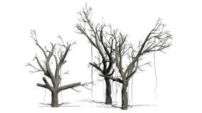 Verscheidene verschillende Chinese Banyan-bomen in weinter vector illustratie