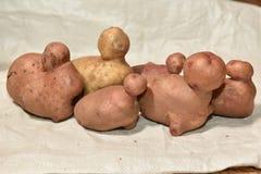 Verscheidene verse aardappels Royalty-vrije Stock Fotografie